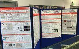 SynSignal Poster Presentation during the Final Meeting