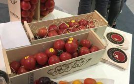 01 img 2814 tomatoes